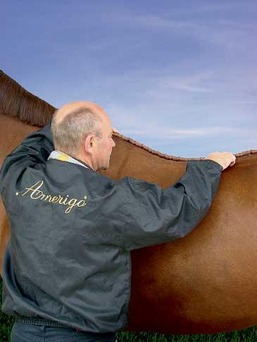 Vega - World Equestrian Brands