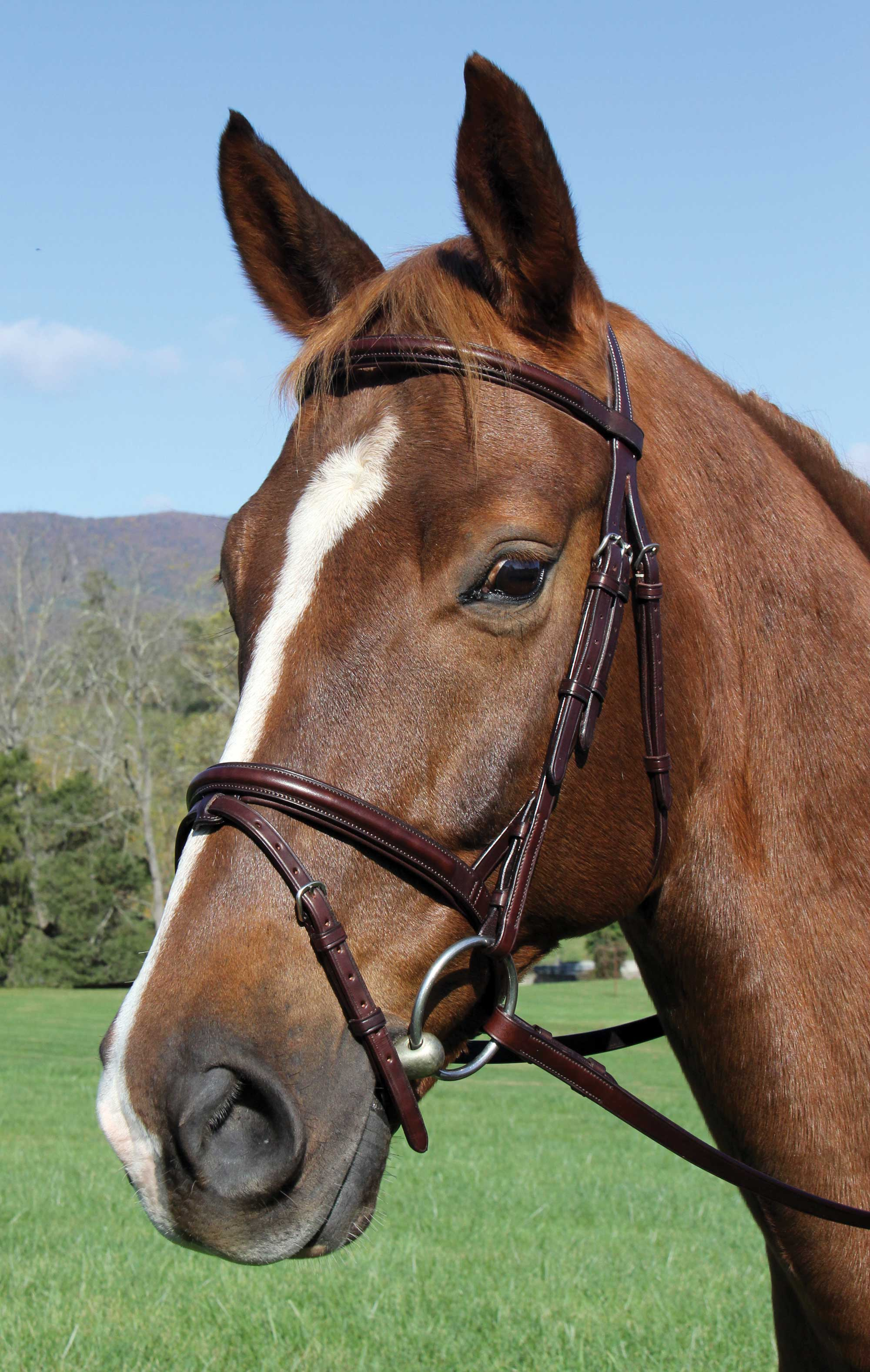Voyager Plain Raised Jump Bridle Black Brown Cob Horse