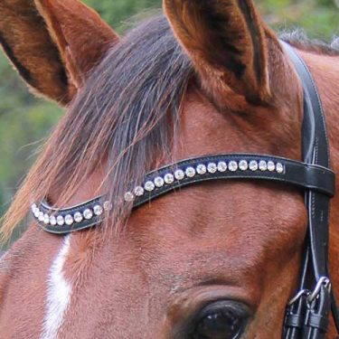 Vespucci - World Equestrian Brands